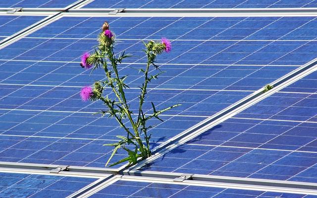 Fotovoltaico con pianta che cresce - Fotovoltaico sostenibilità